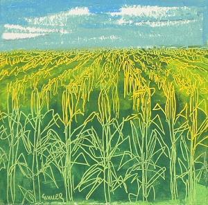 cornfield -1
